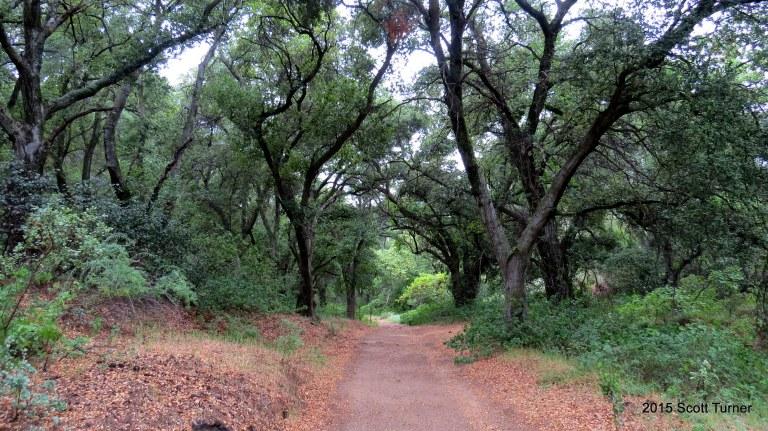 Hauser Canyon Road