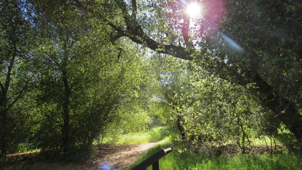 Oak Oasis